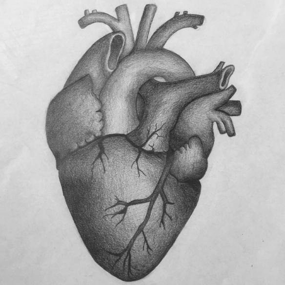 Zeichnung menschliches Herz